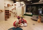 Cat Signature Cafe & Studio