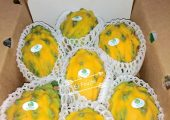 El Fruito Sweet Yellow Dragon Fruit Delivery Service